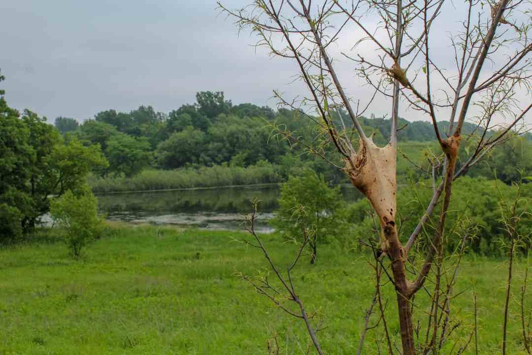 Spiderweb on the Prairie