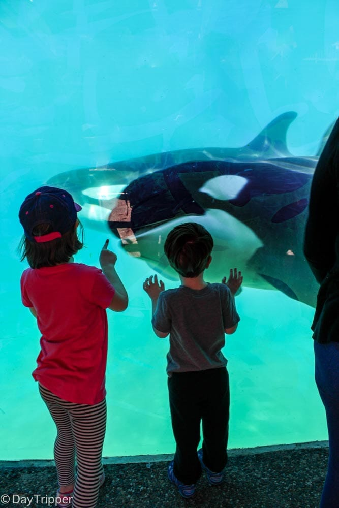 Visiting the Orchas at SeaWorld