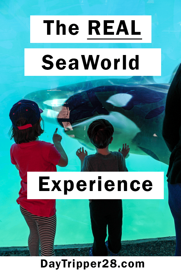 The real SeaWorld San Diego. Tips for your next trip and what you NEED to know before you go. Things to do | California | Orchas | Seal Show