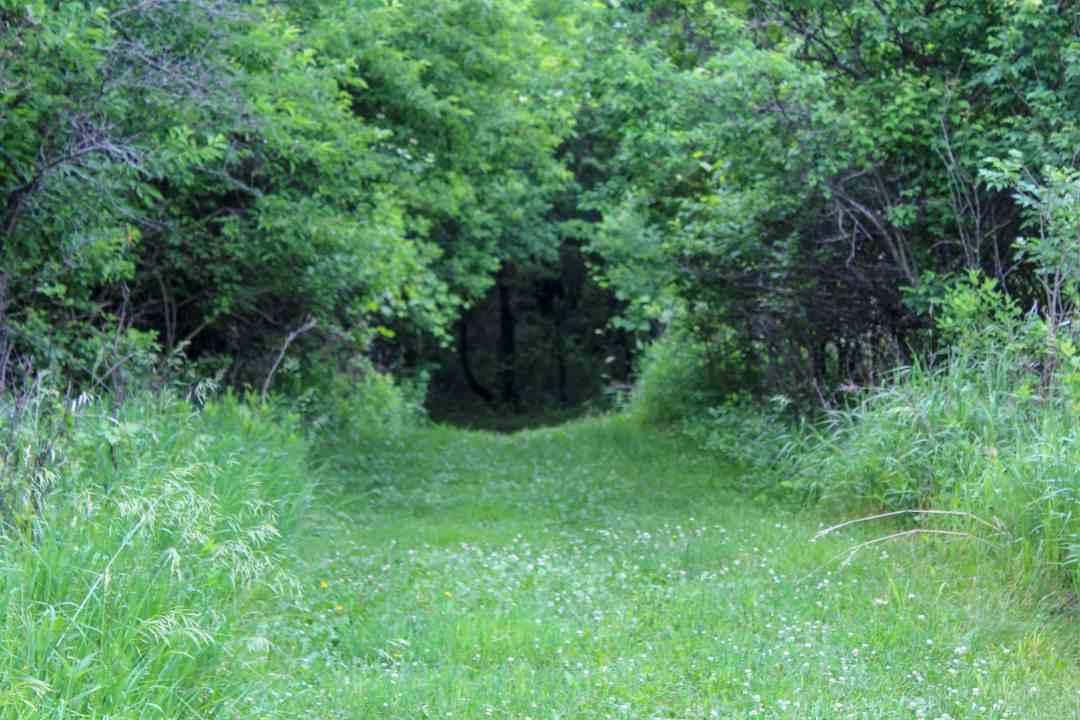 Hiking Trail