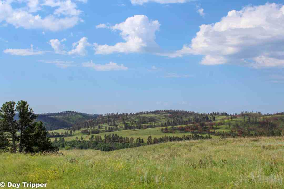 Driving Custer State Park Wildlife Loop