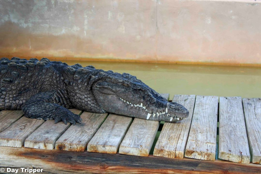 Crocodile at Captain Jacks Animal Sanctuary