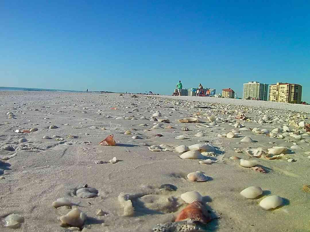 Sea Shells on Marco Island