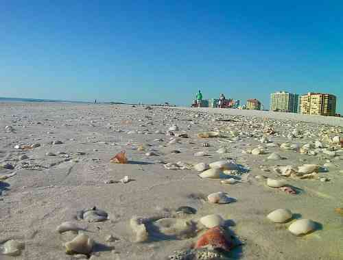 Sea Shells on Marco Island