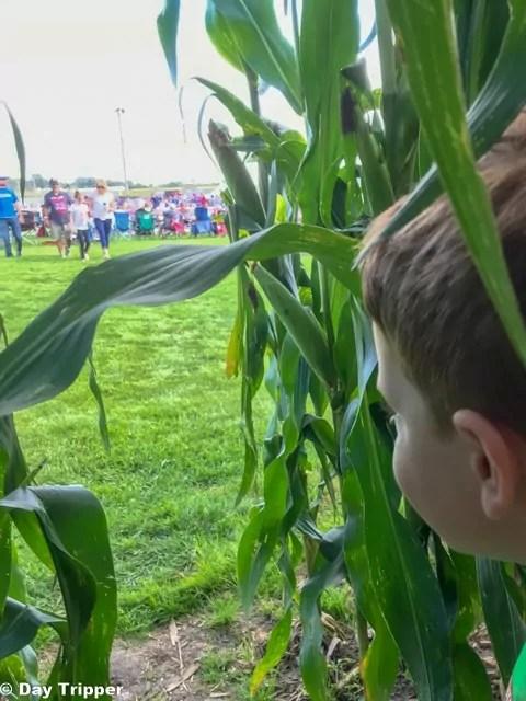 The Corn Field at Field of Dreams