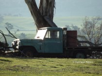 Old farm truck in the paddock, afternoon light