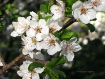 Ah, blossom bliss!