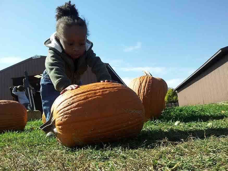 Pumpkins: 14 Places to Pick Your Own Around Rochester
