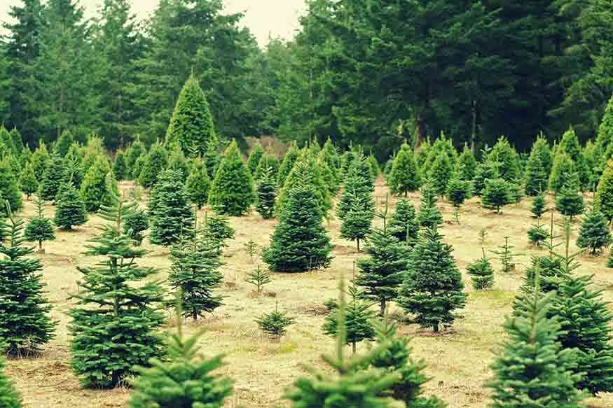 16 Places to Cut Your Own Christmas Tree