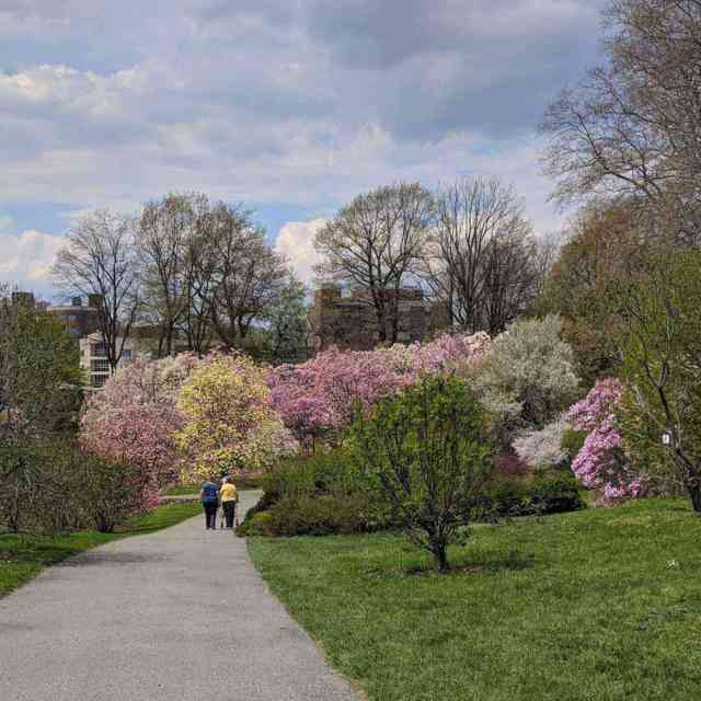 Free Rochester Day Trip Ideas: Highland Park