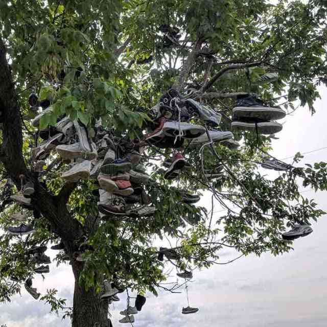 Roadside attractions near Rochester: Three shoe trees in Lyndonville