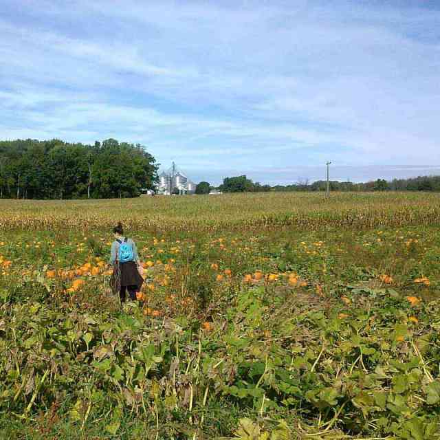 Stokoe Farms pick your own pumpkins