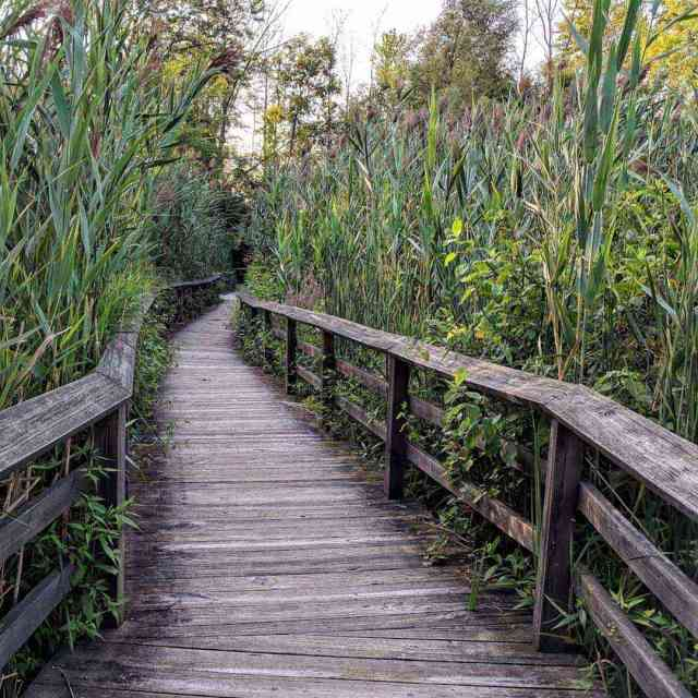 Tinker Nature Park boardwalk