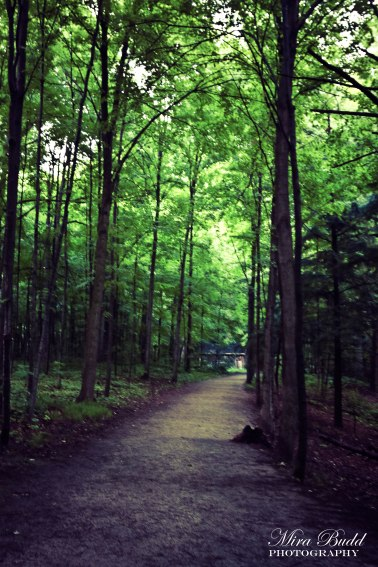 Ontario Hiking Trails, Conservation Areas in Ontario, Sheppard's Bush Conservation Area, Aurora Hiking Trails, Ontario Hiking Trails, Things to See in Aurora, Things to do in Aurora, Things to see in Ontario, Ontario Hiking,
