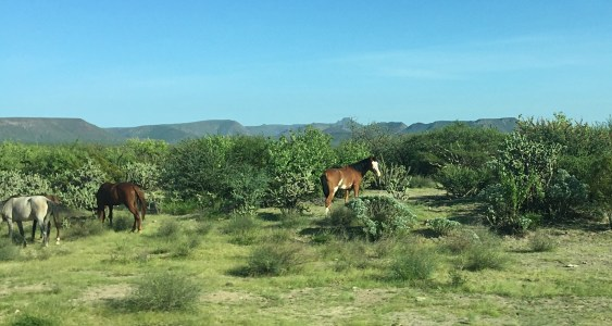 Horses, cows and other animals stand along the roads. You always have to be watching. They can walk out in front of you at anytime.