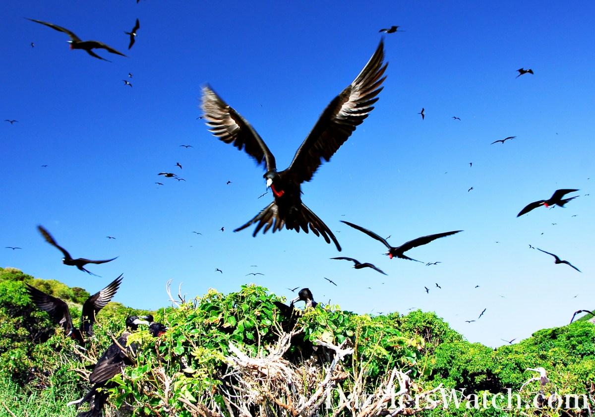 Isla Isabel...The Galapagos of México - Part I