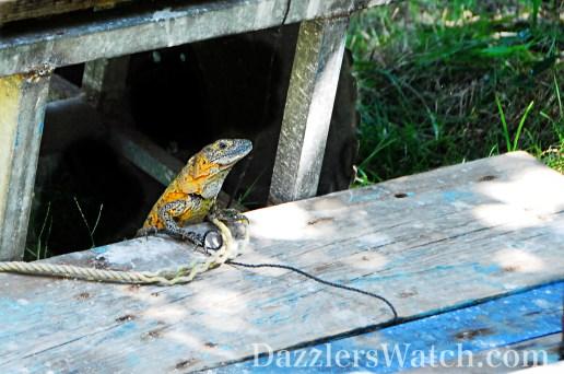 DW Iguana Stand