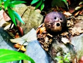 Blog Coconut