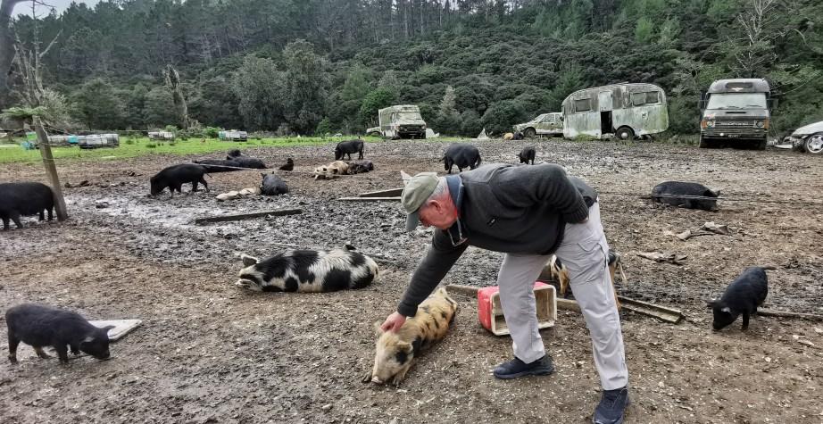 Stuart's Pigs