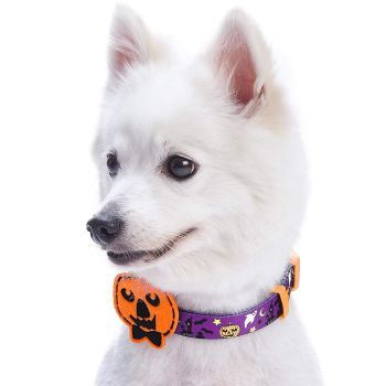 Halloween patterned dog collar with pumpkin decoration you can buy on Amazon.