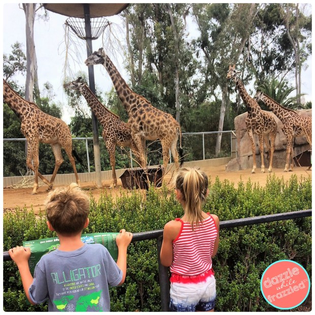 Visit San Diego Zoo in morning to see most animals | DazzleWhileFrazzled.com