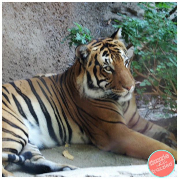How to visit the San Diego Zoo with young kids and family members | DazzleWhileFrazzled.com
