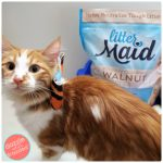 Make a Cat Gift Basket with DIY Pet Bow Tie