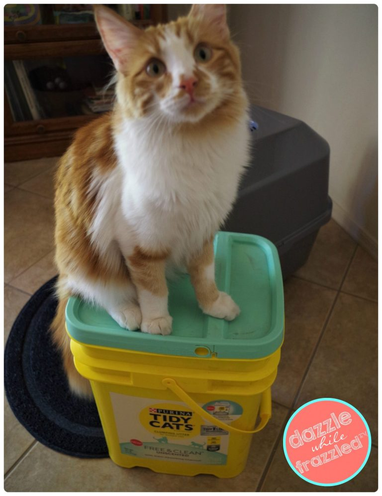Spoil your cat with Tidy Cats Free and Clean Unscented cat litter. DIY personalized cat name tag and checklist for what to know before bringing home a cat.