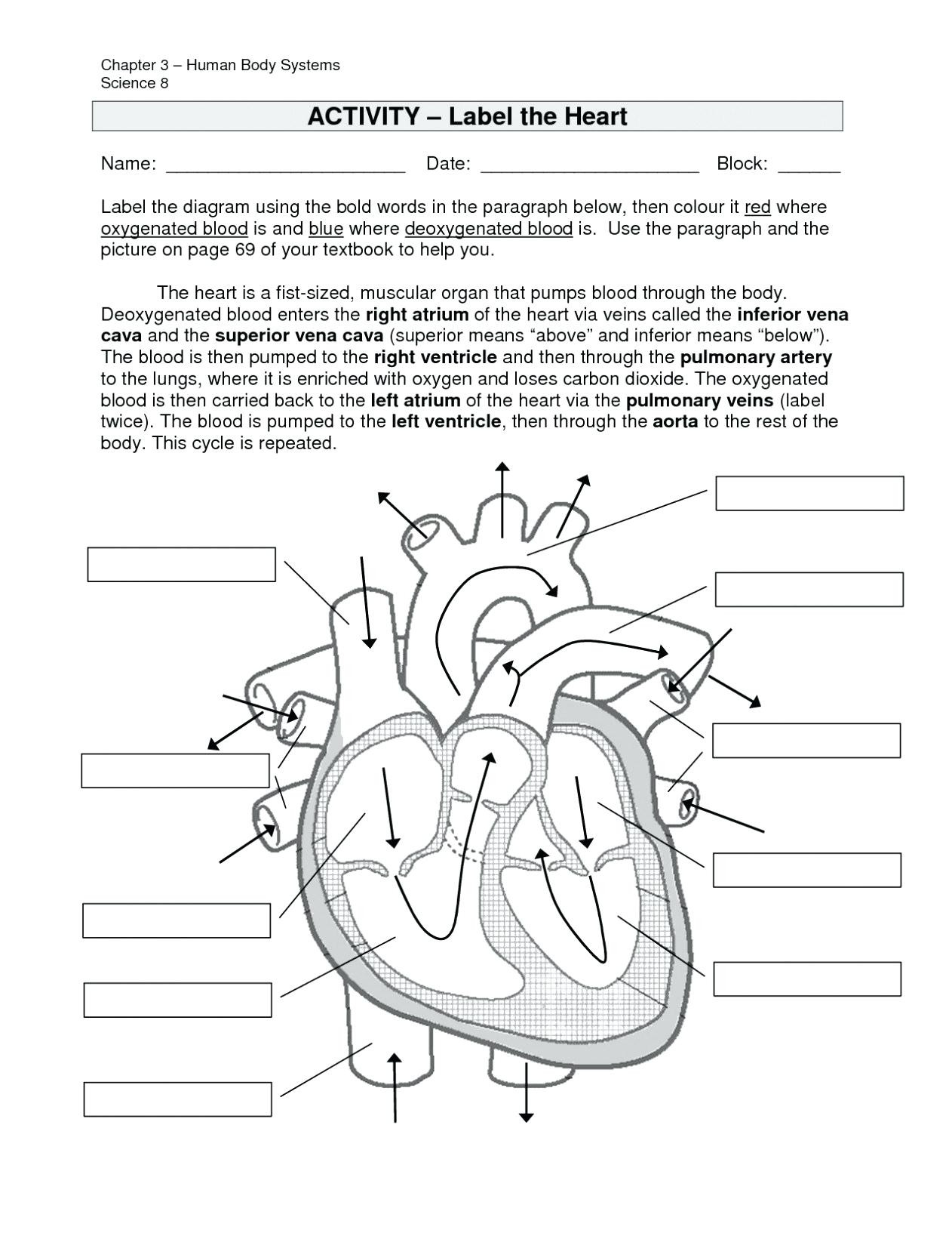 Cell Cycle And Mitosis Coloring Answer Key Regionpaperco
