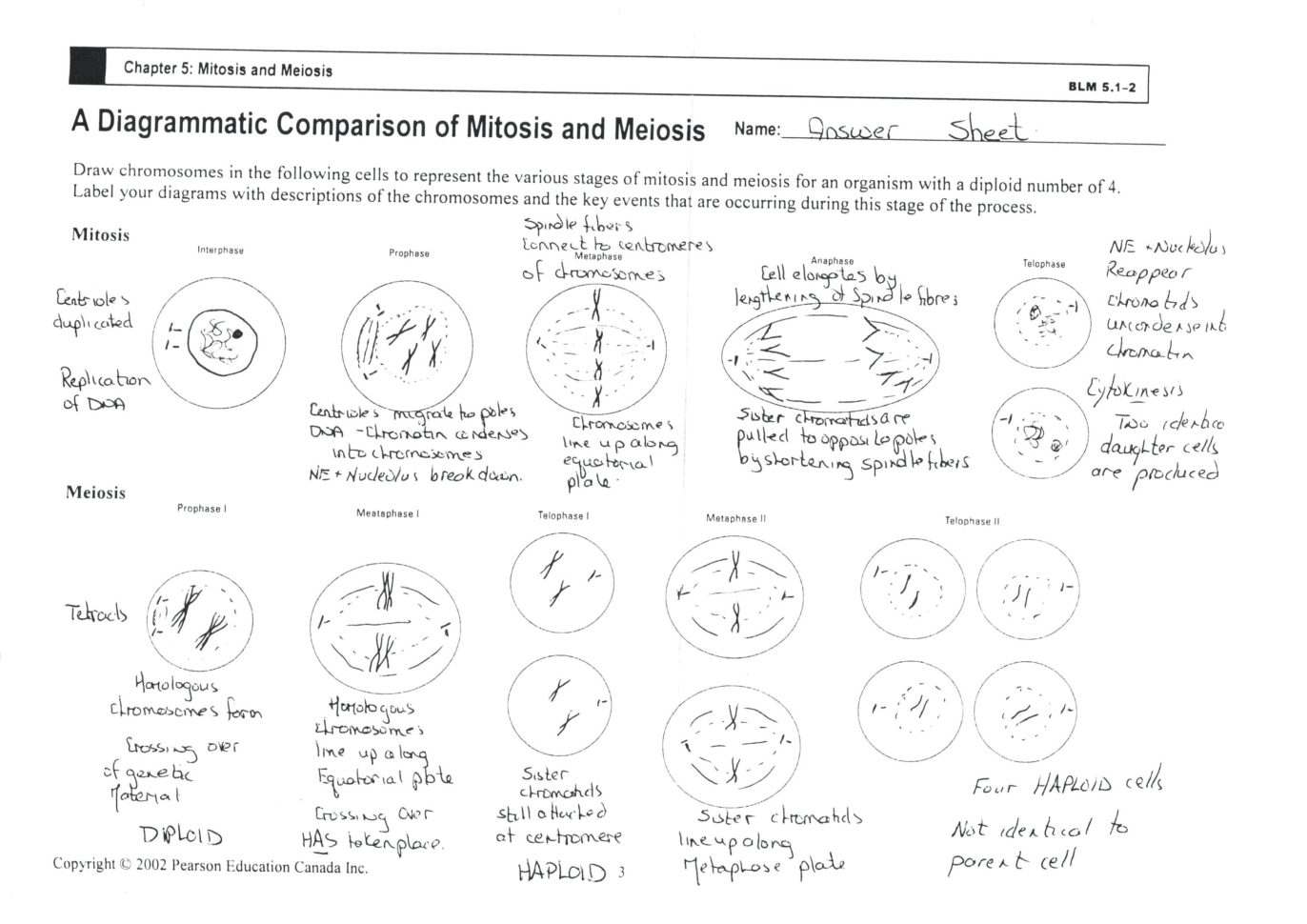 Cell Cycle And Mitosis Coloring Worksheet Answers