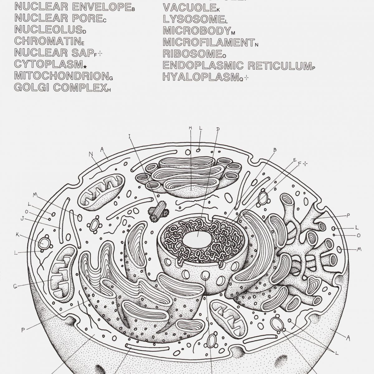 Cell Labeling Worksheet Answers Animal And Plant Cell