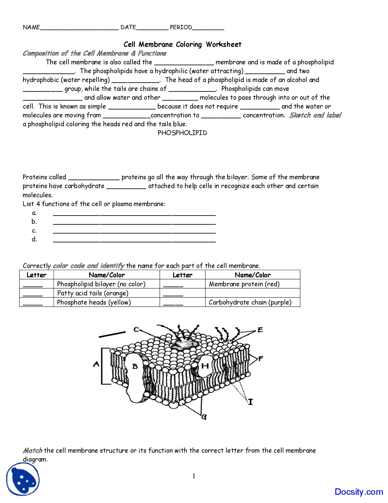Cell Membrane Coloring Worksheet