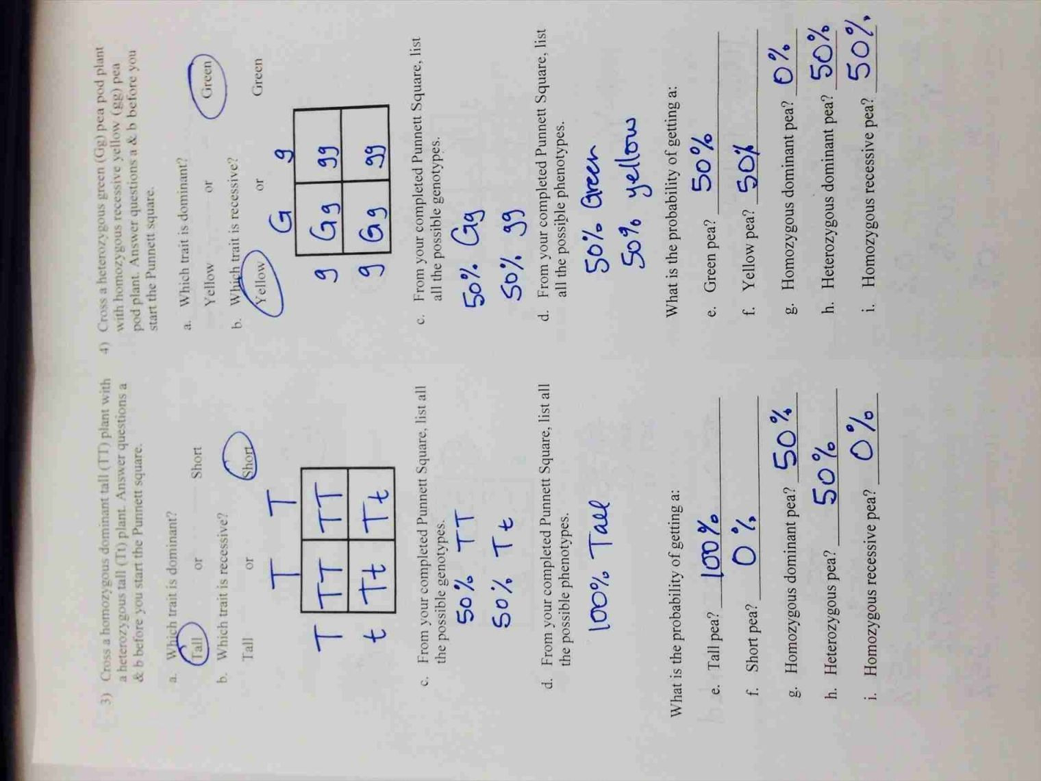 Codominance Worksheet With Answers
