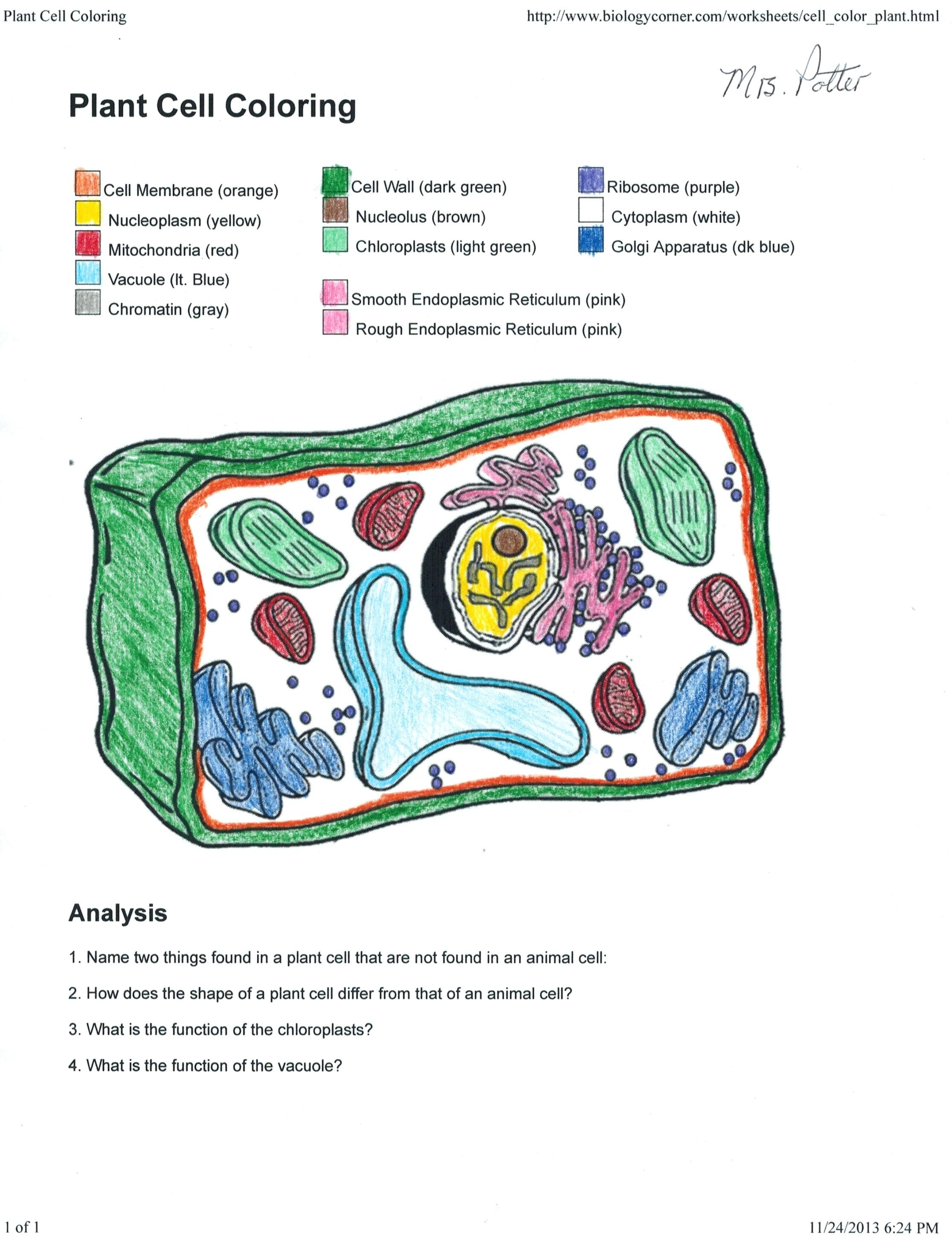 Plant Cell Worksheet Answers