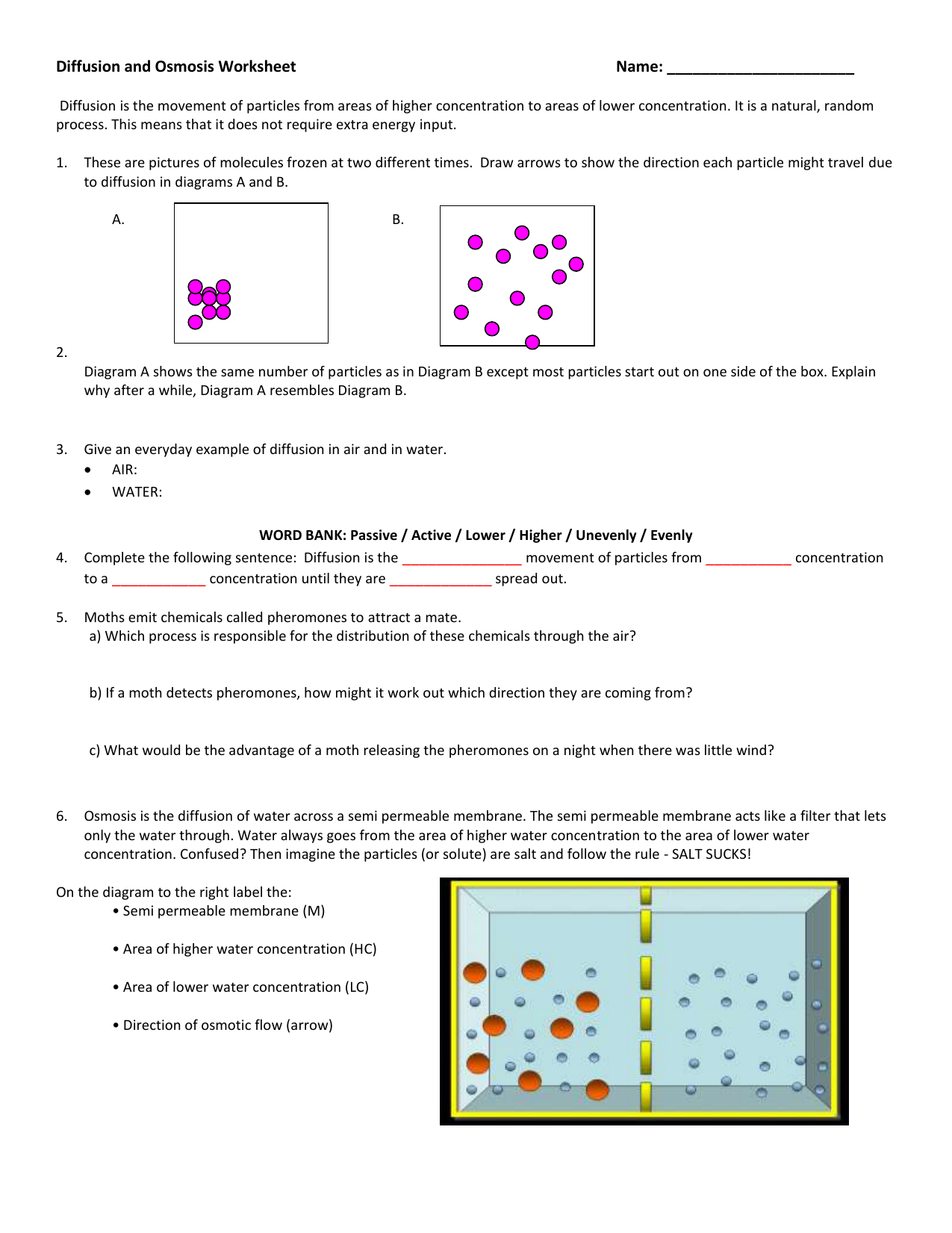 Osmosis Worksheet Answers