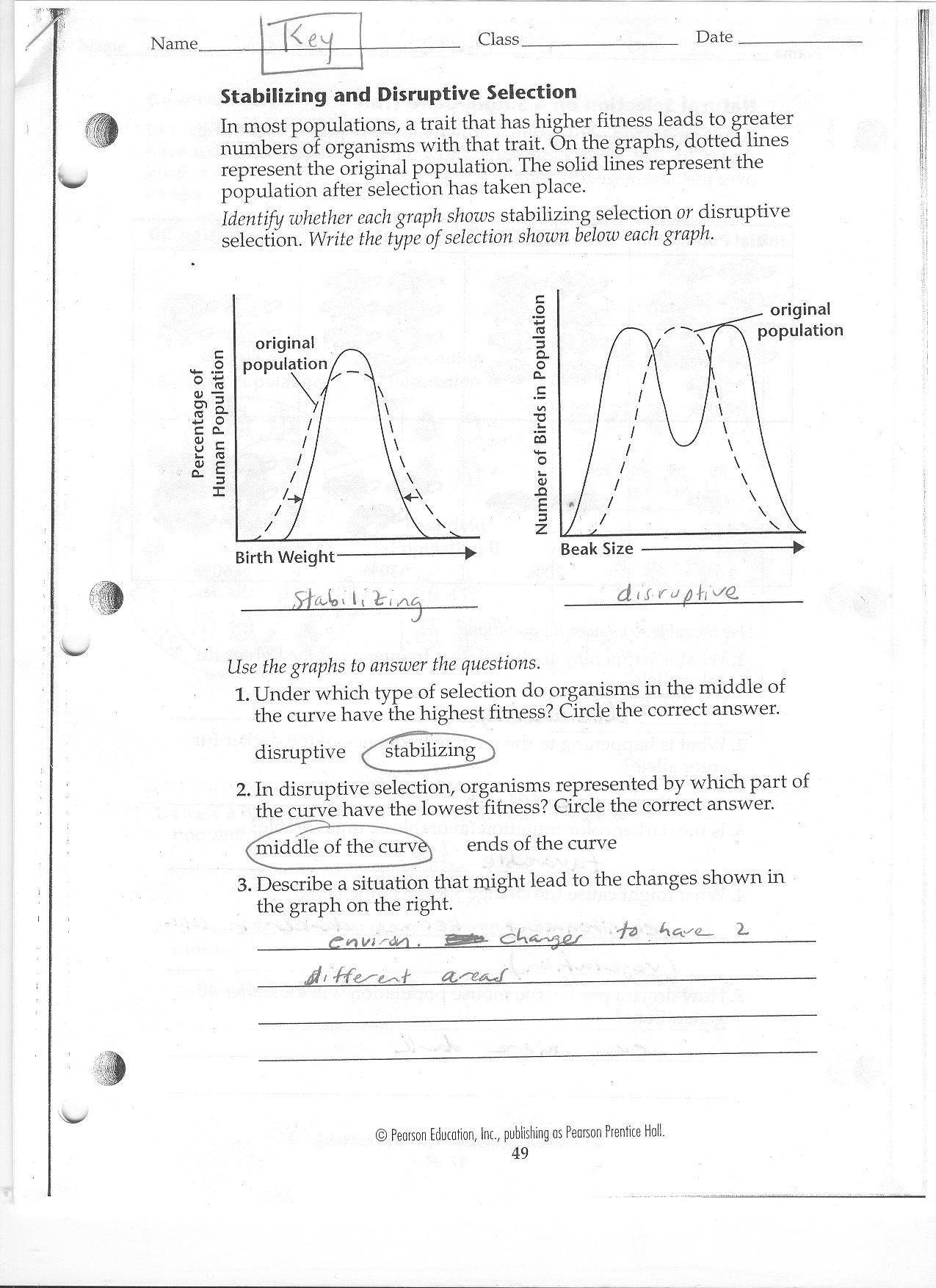 Dna Review Worksheet Answer Key Worksheet