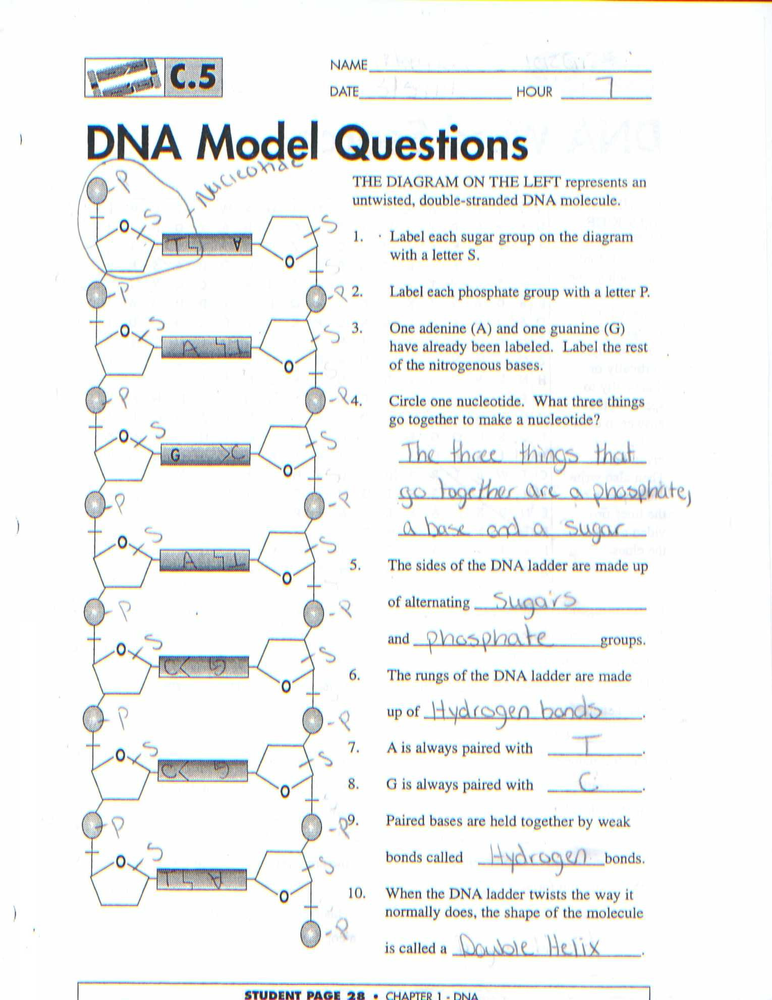 Dna The Molecule Of Heredity Worksheet Yooob