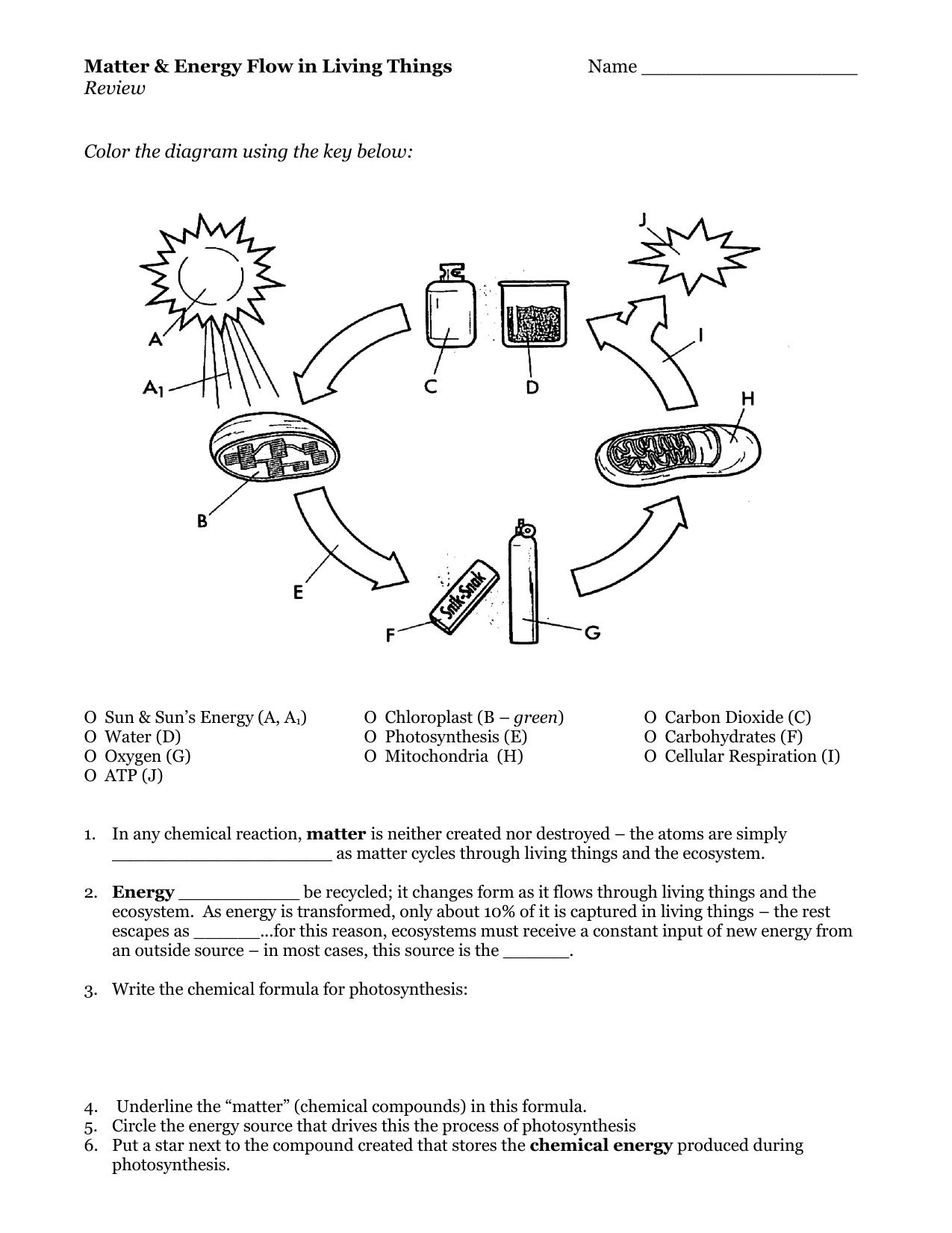 Energy Flow In Living Things Worksheet