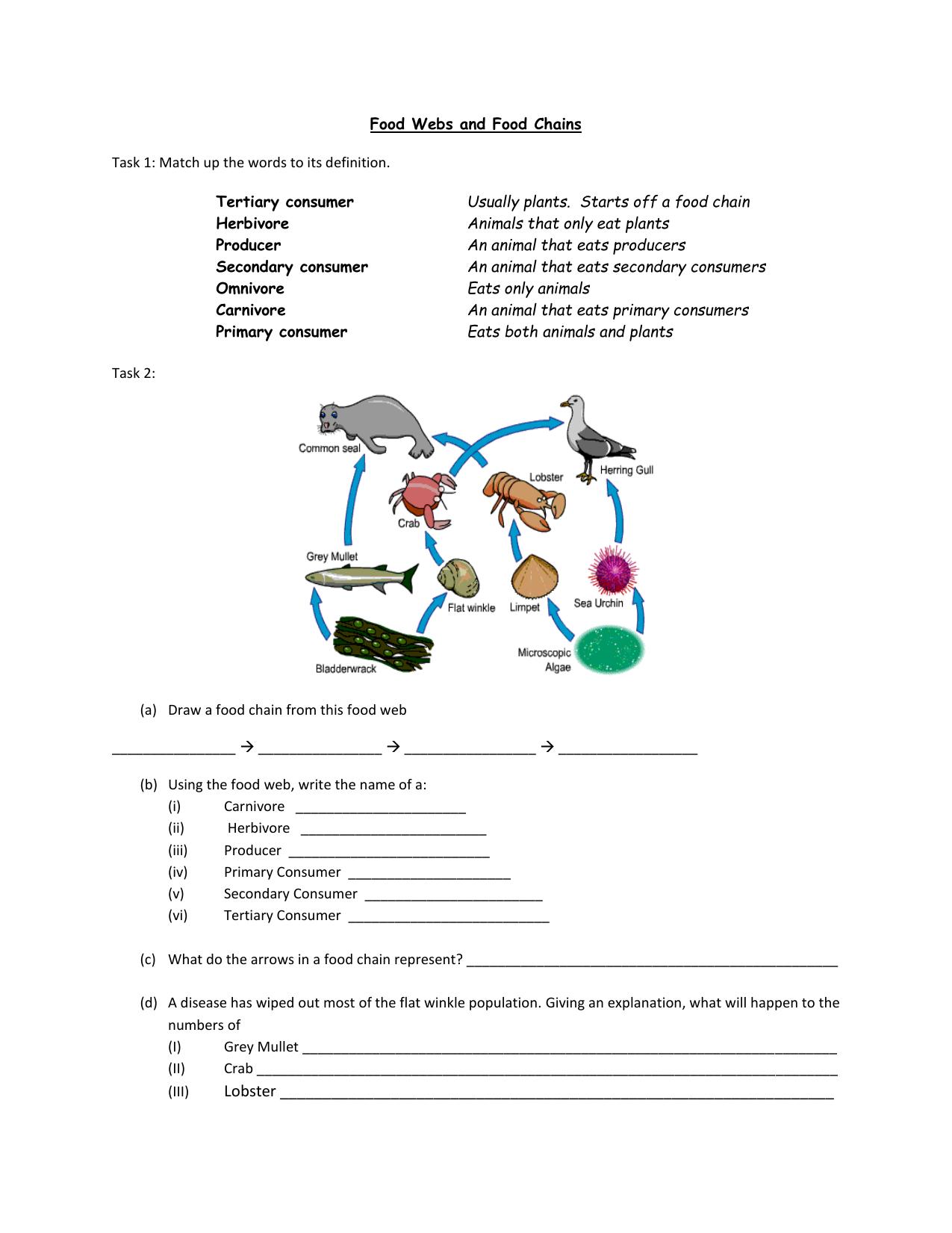 Draw A Food Web Worksheet