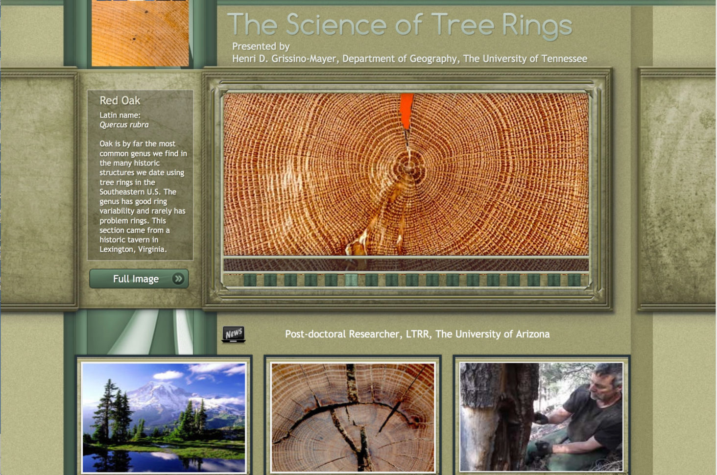 Tree Ring Activity Worksheet Answers