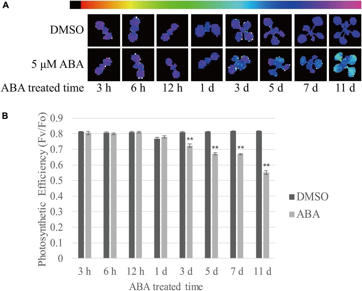 Leaf Chromatography Lab Worksheet