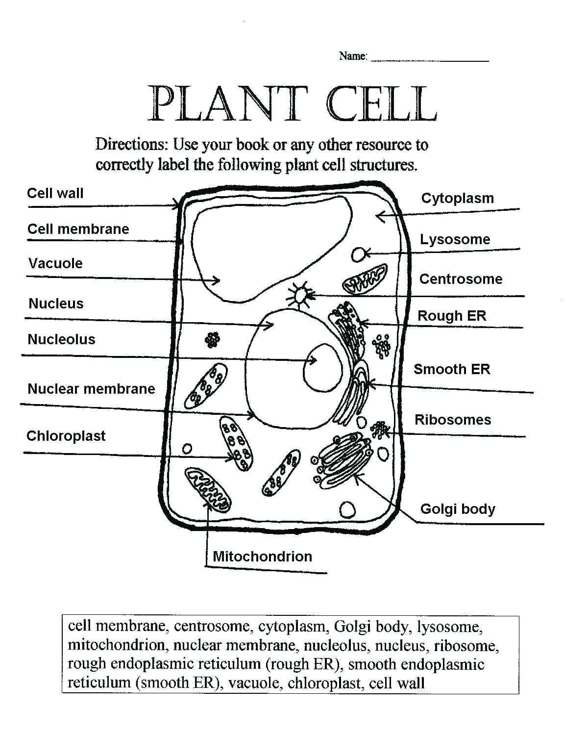 Plant And Animal Cell Coloring Worksheets Key