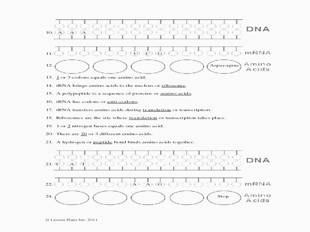 Protein Synthesis Amp Amino Acid Worksheet
