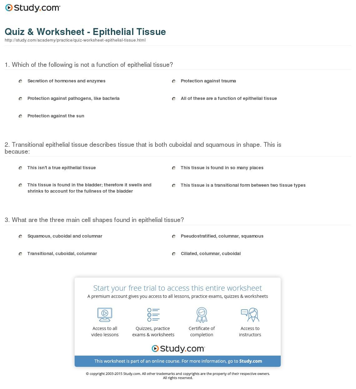Quiz Worksheet Epithelial Tissue Study