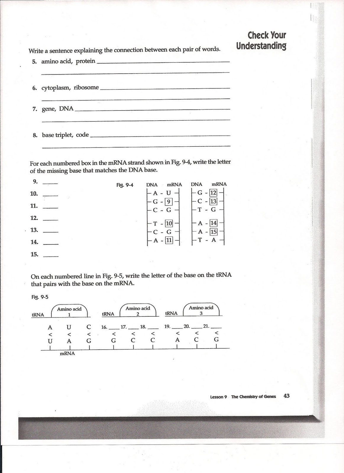 Say It With Dna Protein Synthesis Worksheet Ms Friedman S