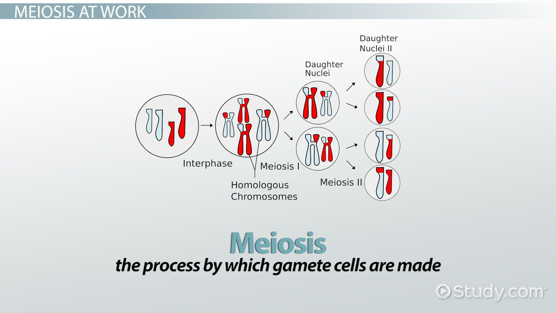 The P53 Gene And Cancer Student Worksheet Answers