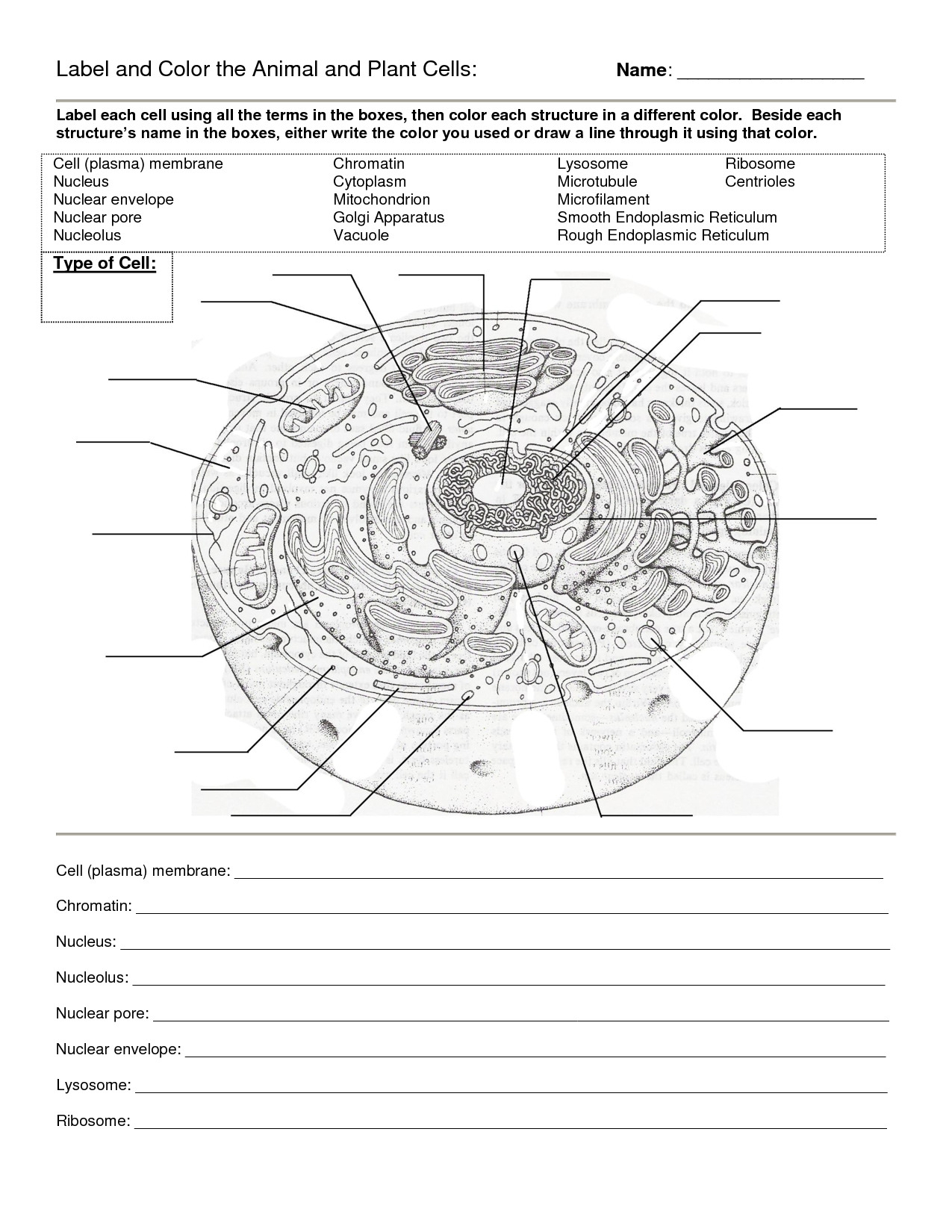 Worksheet Plant And Animal Cell Worksheet Animal Cells