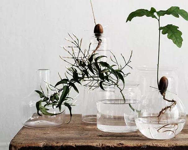 suda-yetisen-bitkiler3