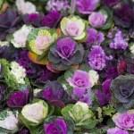 The Prettiest Fall Wedding Flowers David S Bridal Blog