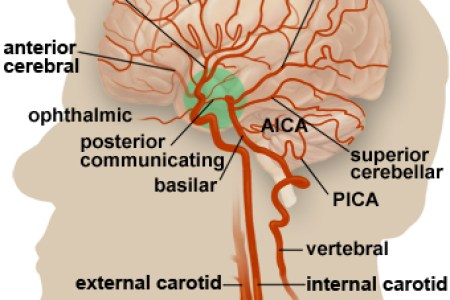 Interior areas of the brain diagram full hd maps locations d brain on the app store d brain on the app store ways to draw a brain wikihow learn the different parts of the brain cerebral cortex video khan academy ccuart Image collections